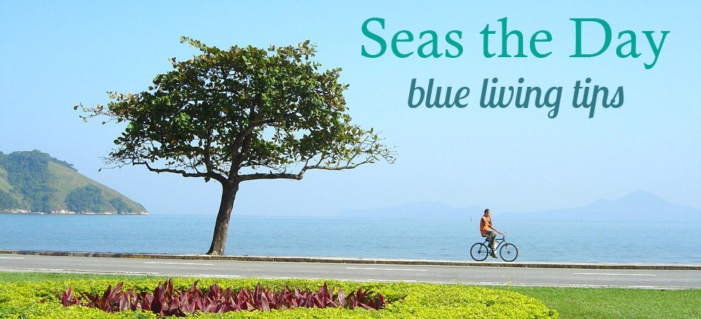 Seas the Day in May - Create an ocean-friendly lawn and garden - The Ocean Project - 웹