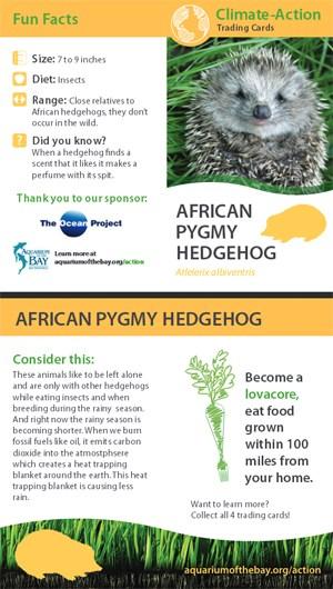 hedgehog-card