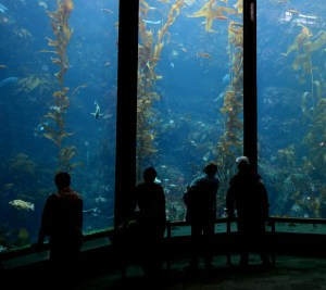visitors at an aquarium